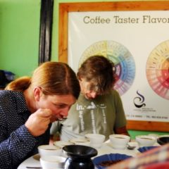 Cupping bei ACRIM