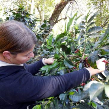 Kaffeereise: Ecuador (August 2014)