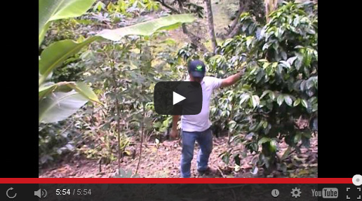 Kaffeereise, Ecuador, Kaffee, Produzenten