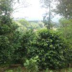Kaffee im Valle Central