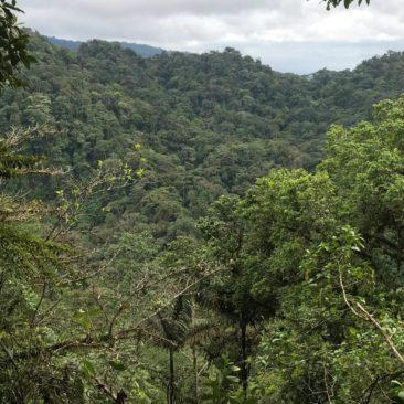 Dieser Regenwald wird nun durch Euren Kauf unseres Kaffees für immer geschützt © Martin Schaefer
