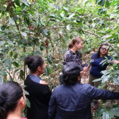 Besuch auf Kaffeefeld von Nidia