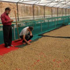Organic_Wayanad Kaffee