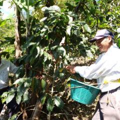 Kaffee Produzent Arturo