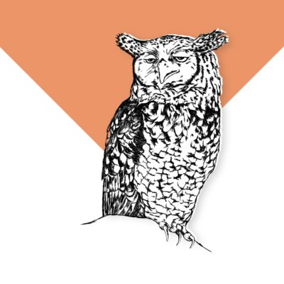 Sleepy Owl - Decaffeinated coffee (Decaf)